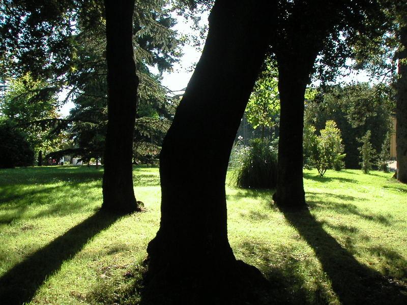 ombre di alberi