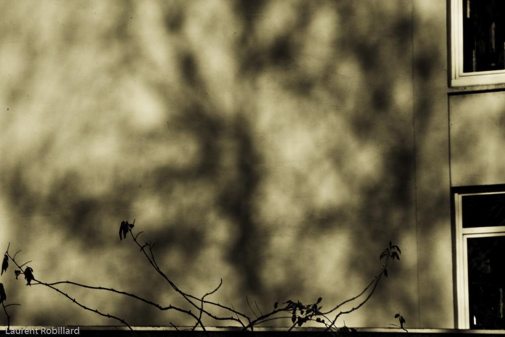 ombre sur mur en compagnie d'une plante