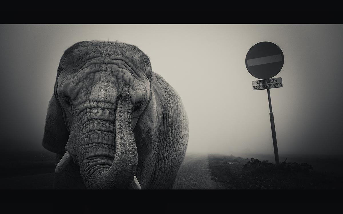 On a foggy sunday in november
