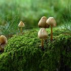 ... on a moss-covered tree stump