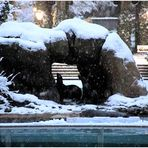 On a Snowy Evening in Central Park - No.2 - Sea Lion in Central Garden