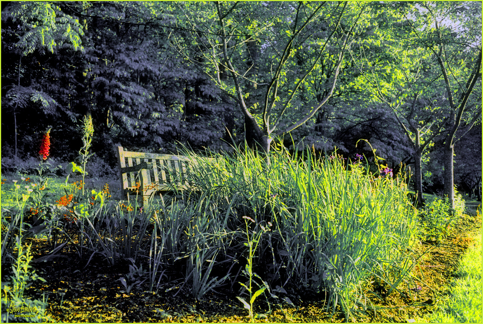 On a Springtime Stroll through Meadowlark Gardens