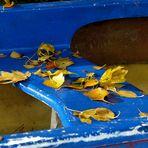 ...on an abandoned canoe