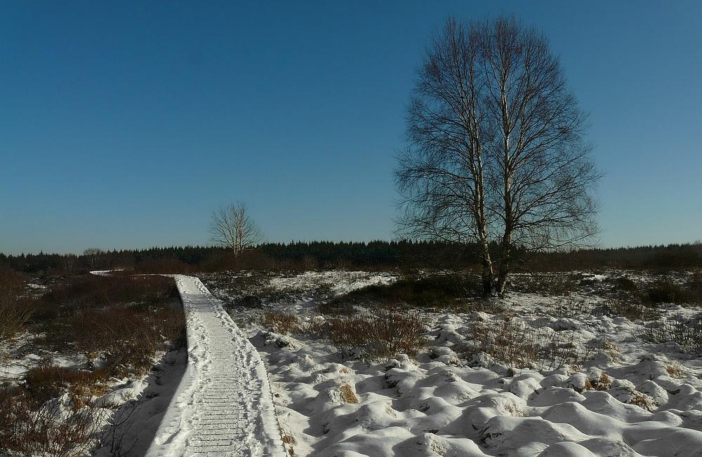 On hike through the snowy swamp (4)