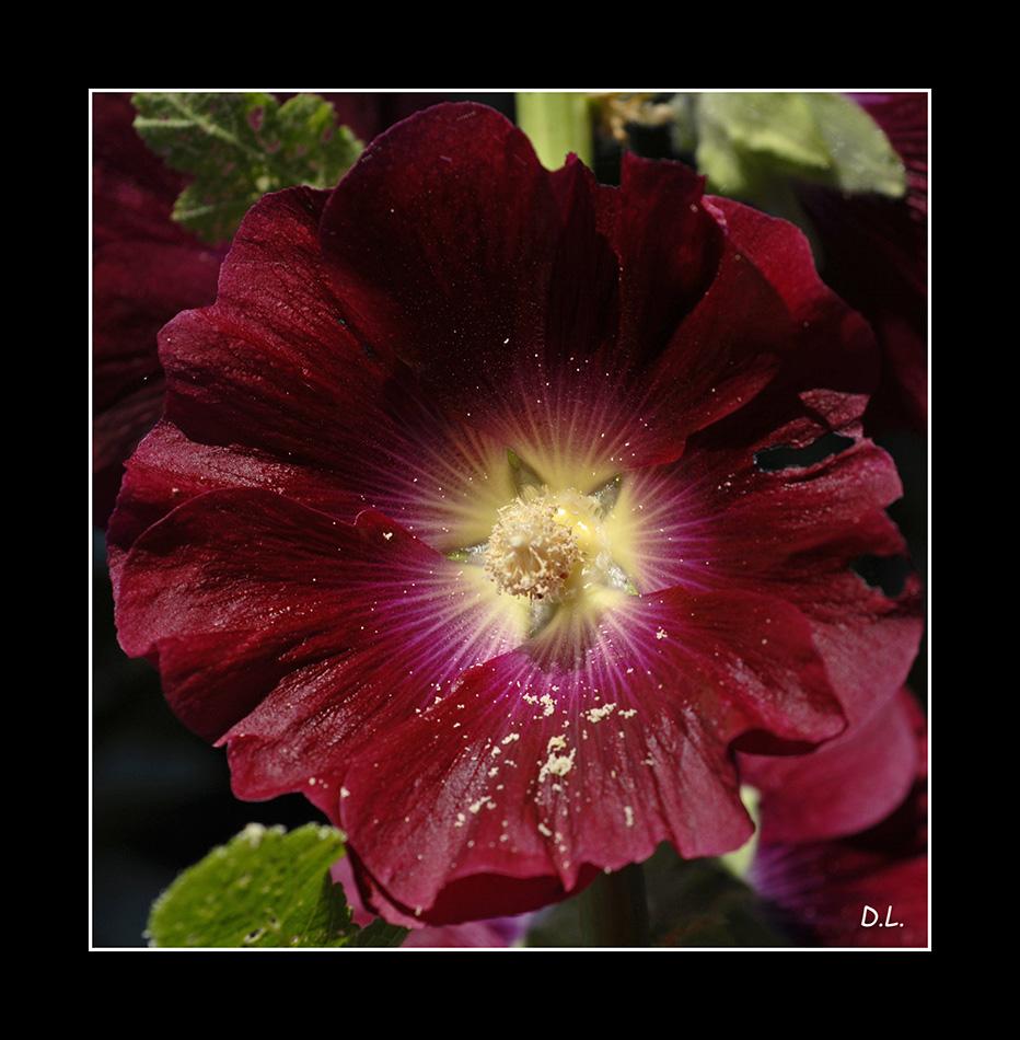 """..."""" On m'appelle Fleur de Rose """"...."""