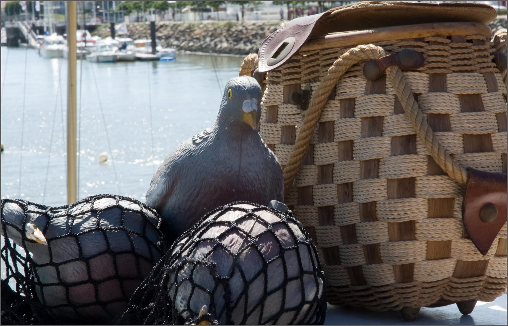 On me prend pour un pigeon?...
