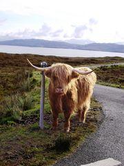 On my way to Elgol (Skye)...