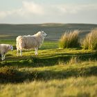 on the hilltop, Brecon Beacons