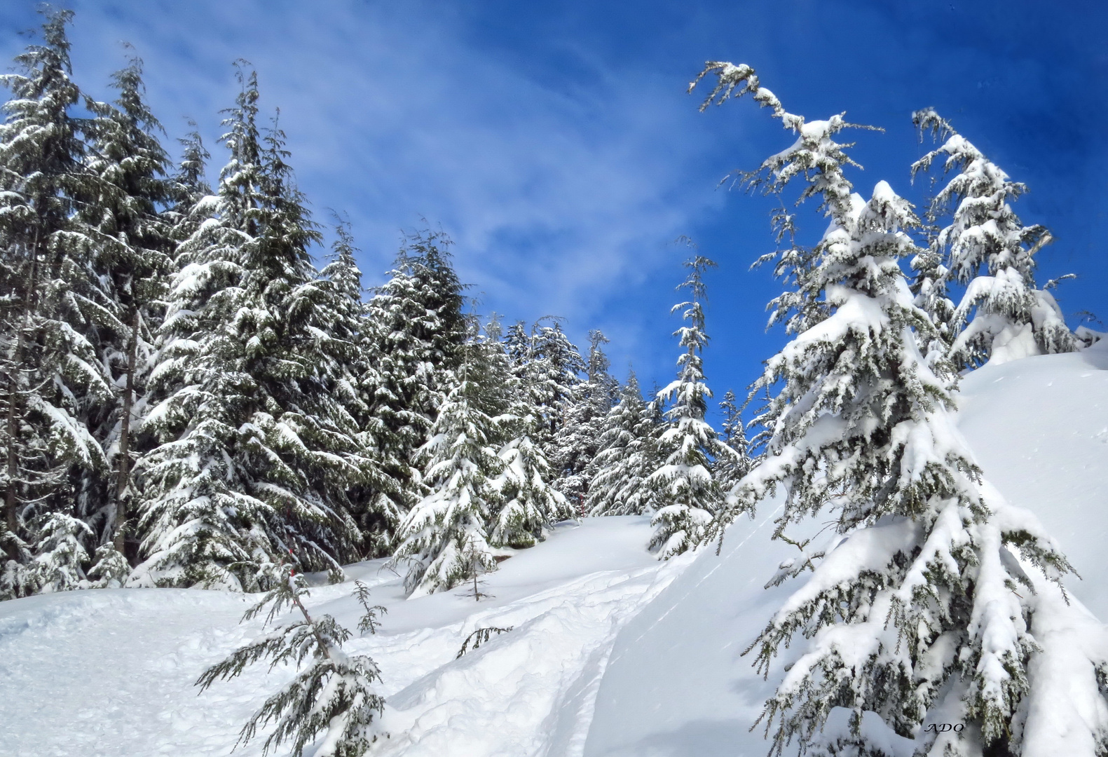 On the Snowshoe Trail (2)