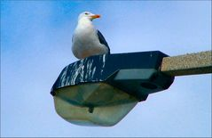 Once upon a time there was a seagull