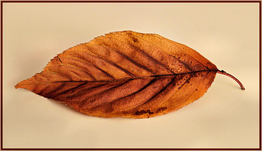 One dry  leaf