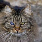 One-Eyed-Cat