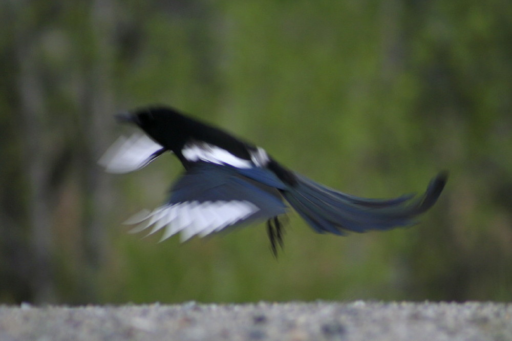 One for sorrow 0655.1