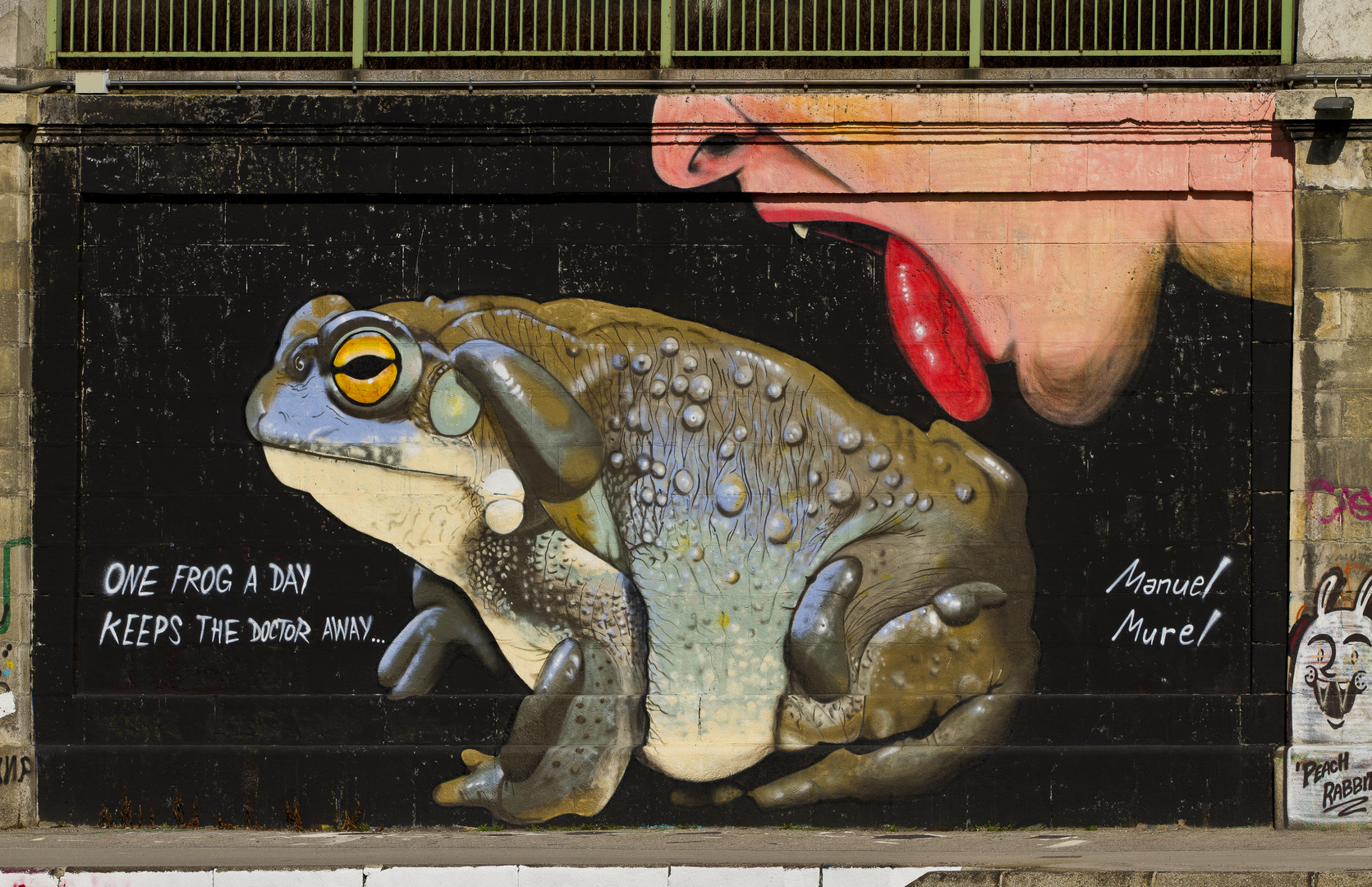 One Frog a Day...