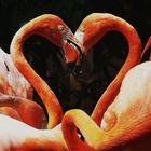 """One Heart"""