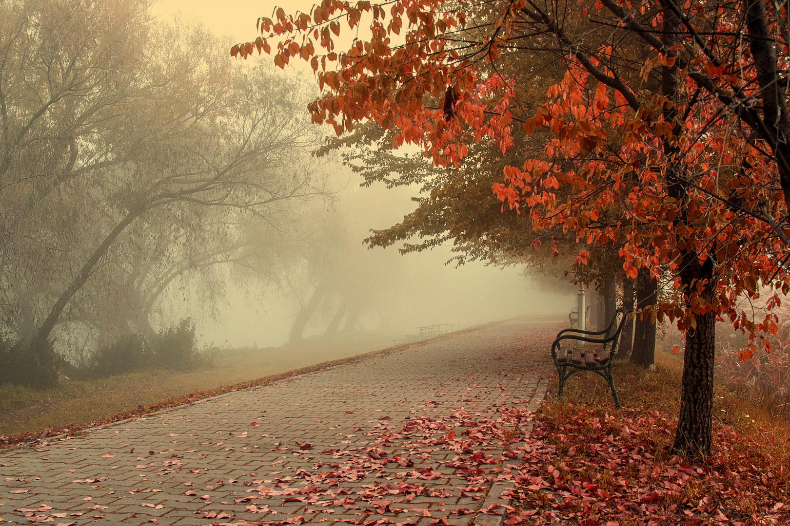 One misty autumn morning