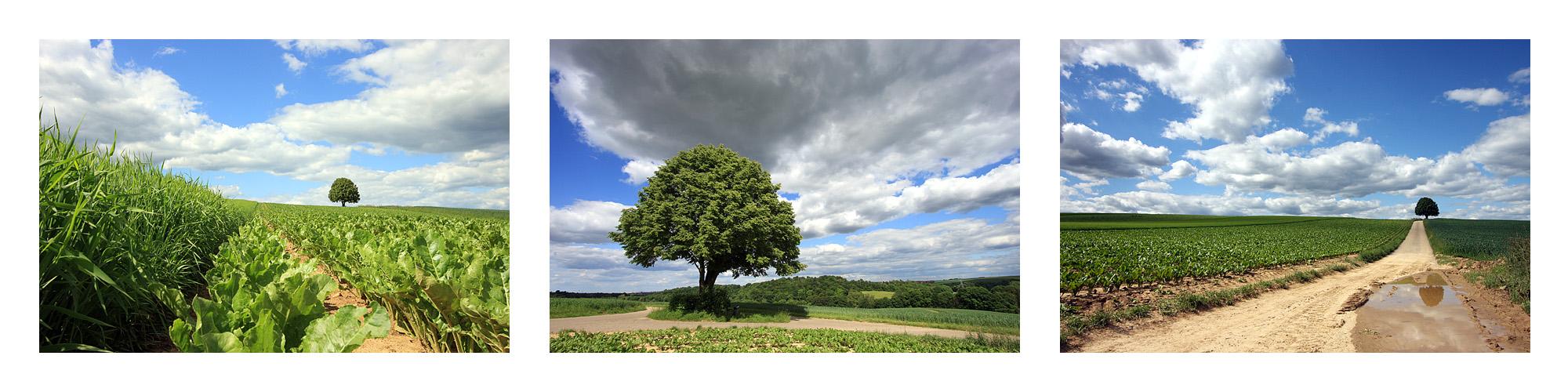 One tree - three views
