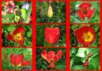 one tulip life