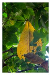 One yellow leaf