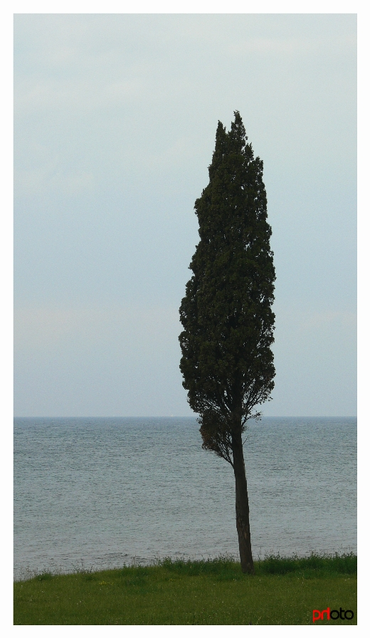 only a tree