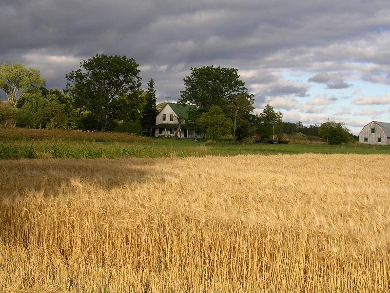 Ontario, Canada. Fall, 2004