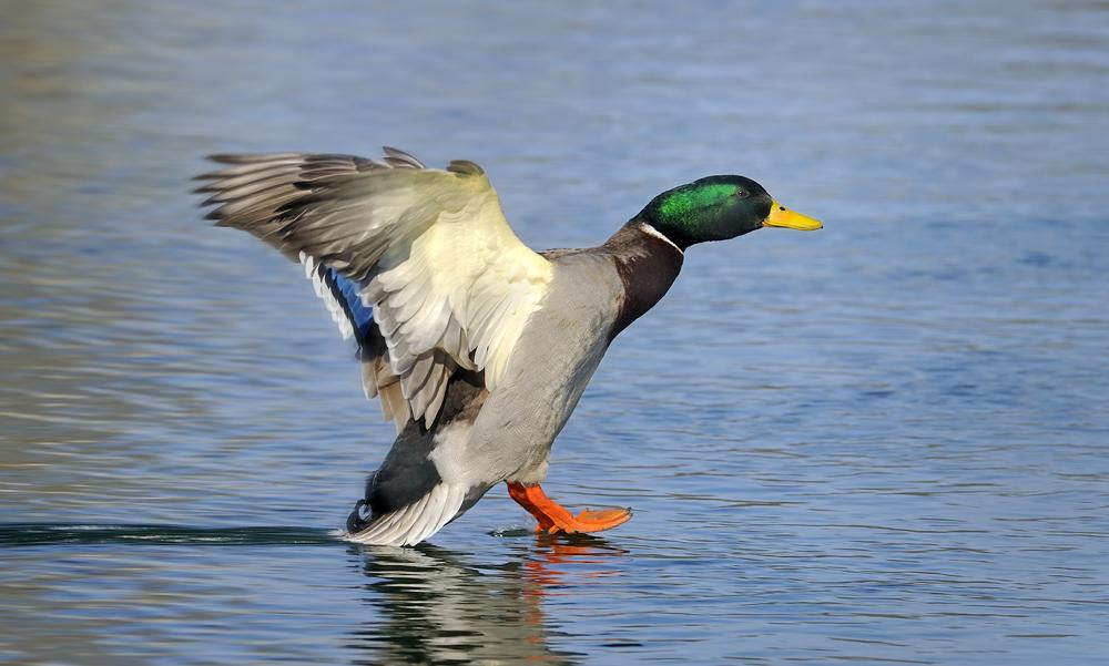 oo __ air duck __ donald flight 4377 __ 18:35 __ gelandet