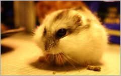 o.o Hamsterbacken o.o