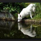 O_O White wolf!