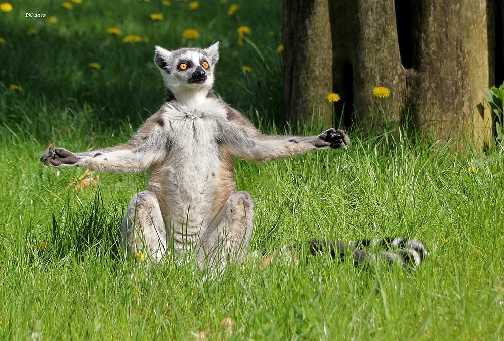 Oommmmmm Foto Bild Tiere Zoo Wildpark Falknerei Saugetiere