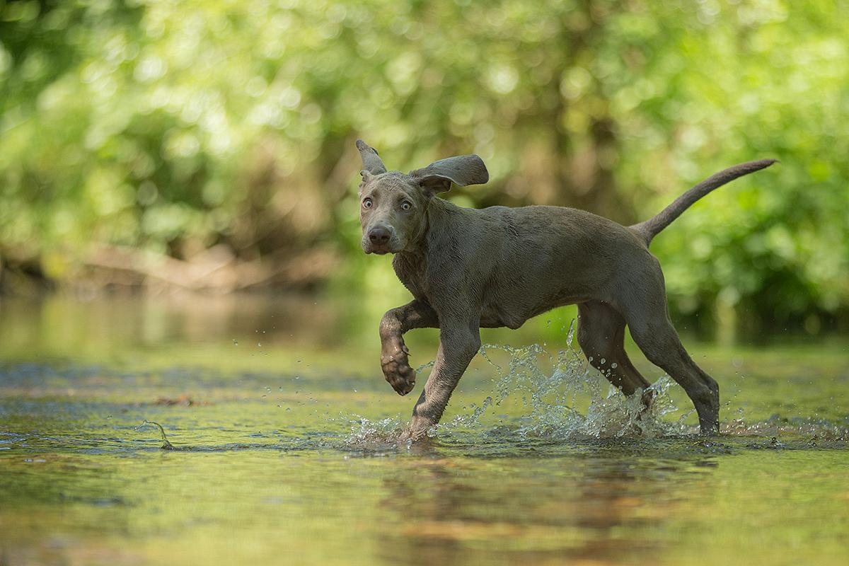 Ooooh Was Ist Das Denn Foto Bild Tiere Haustiere Hunde