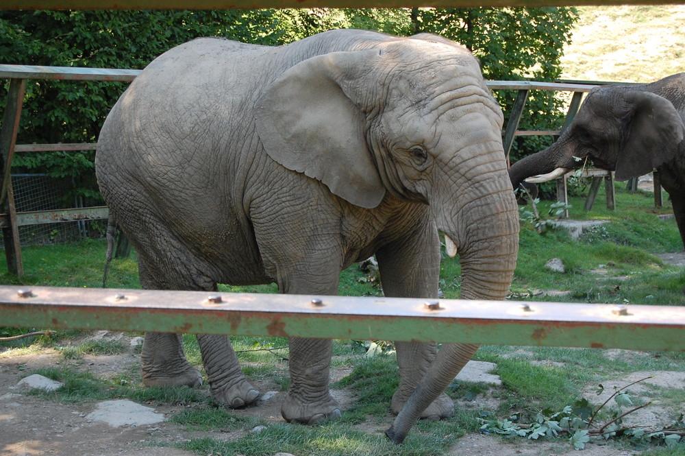 opel zoo frankfurt a.m foto & bild | tiere, zoo, wildpark