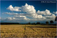 Open fields