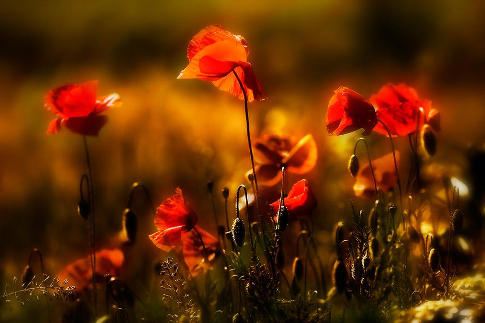 Opium für die Seele