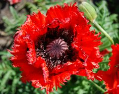 ...Opium... ;o))