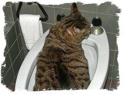 Ora del bagno.