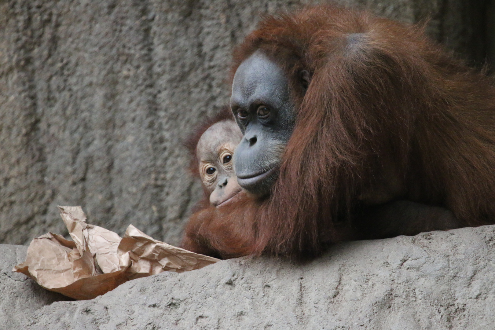 ...Orang Utan Mutter mit Kind..