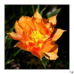 --- Orange 2 ---