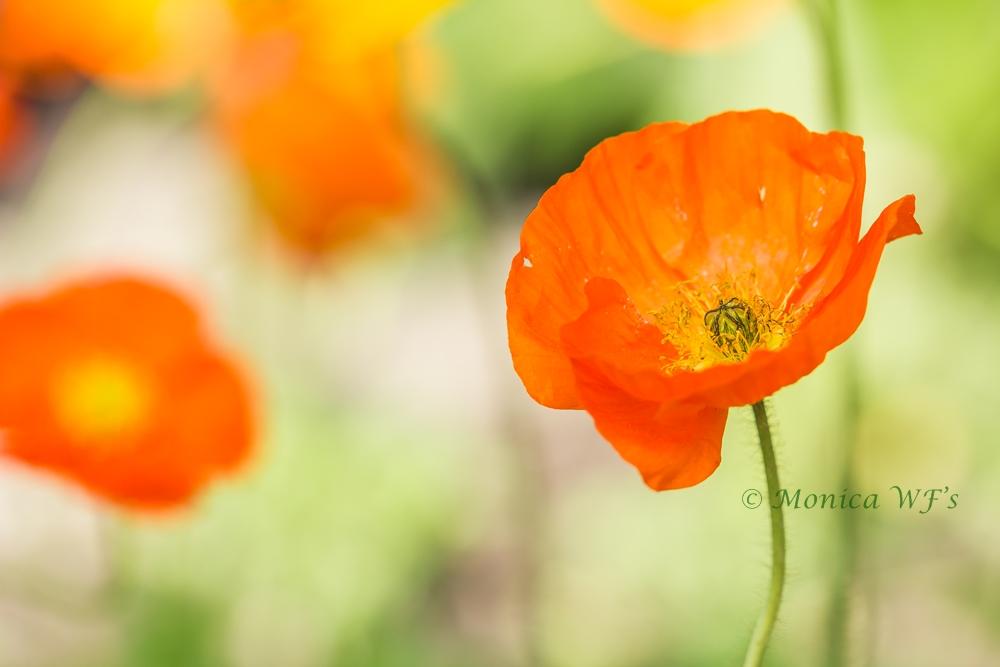 Orange ....