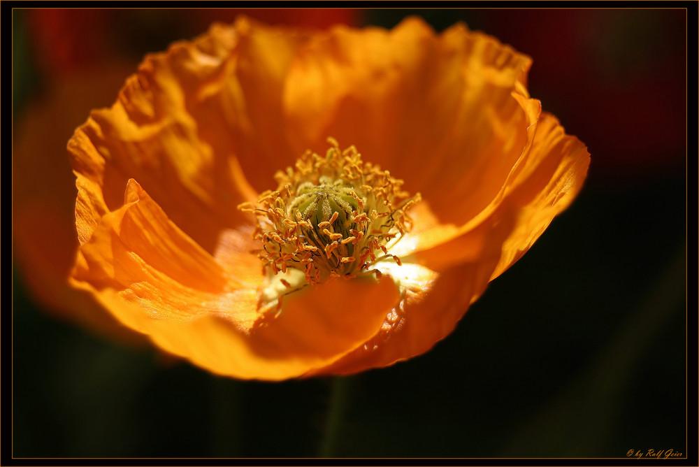 Orange :-)
