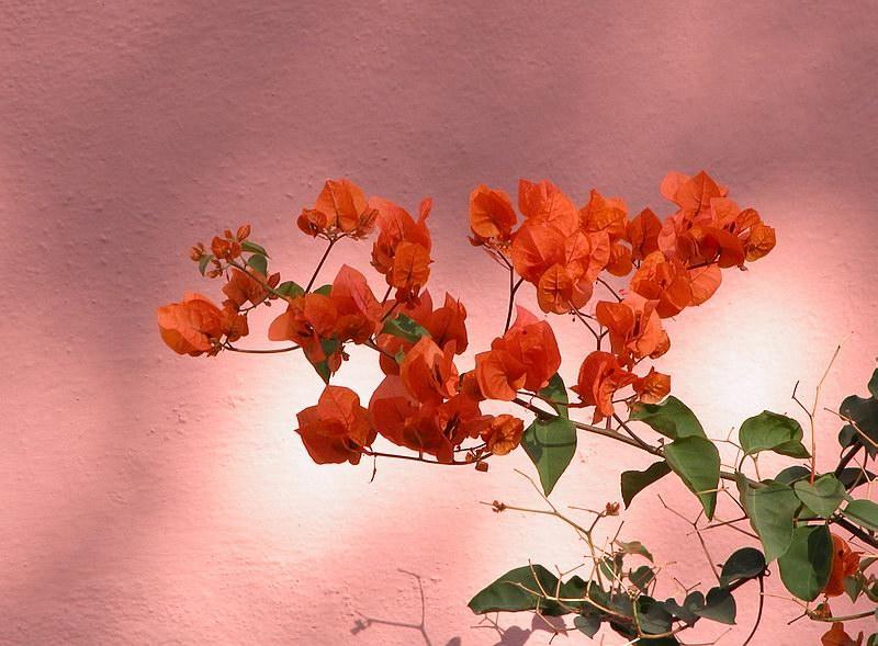 Orange auf Rosa