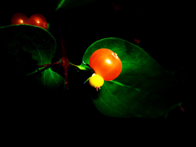 Orange Beere