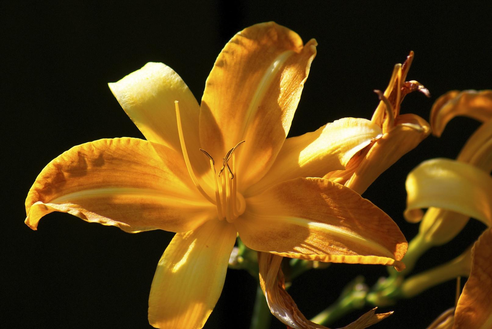 Orange Blüte