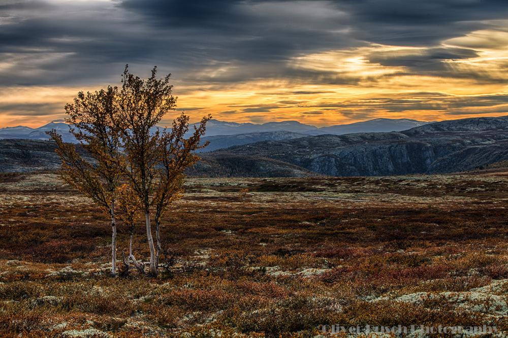 Orange-Braune Herbststimmung im Fjell