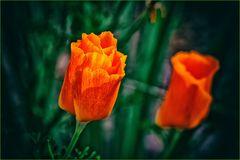 orange .....