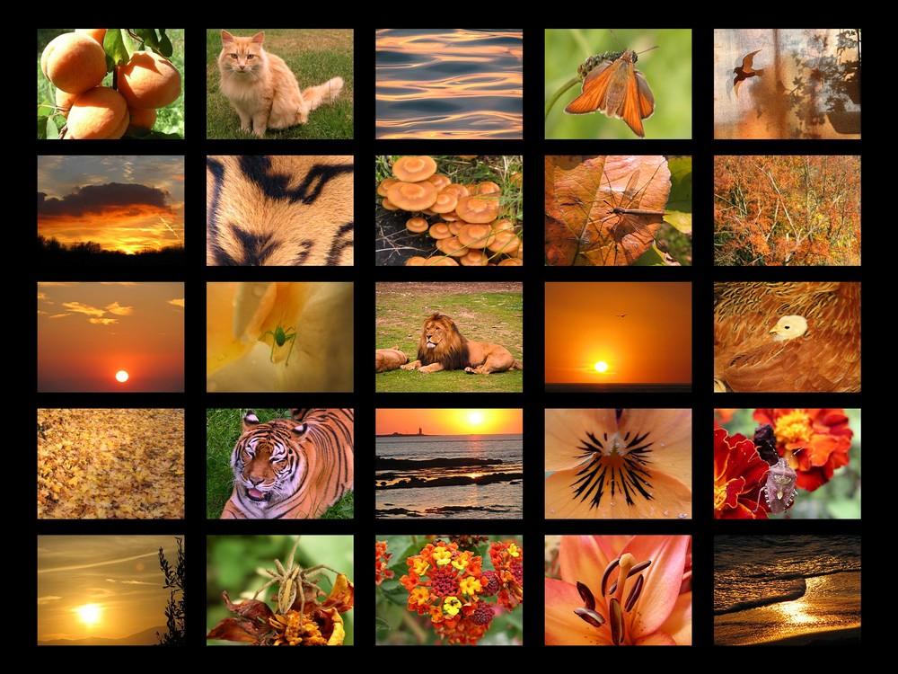 orange couleur de l'automne