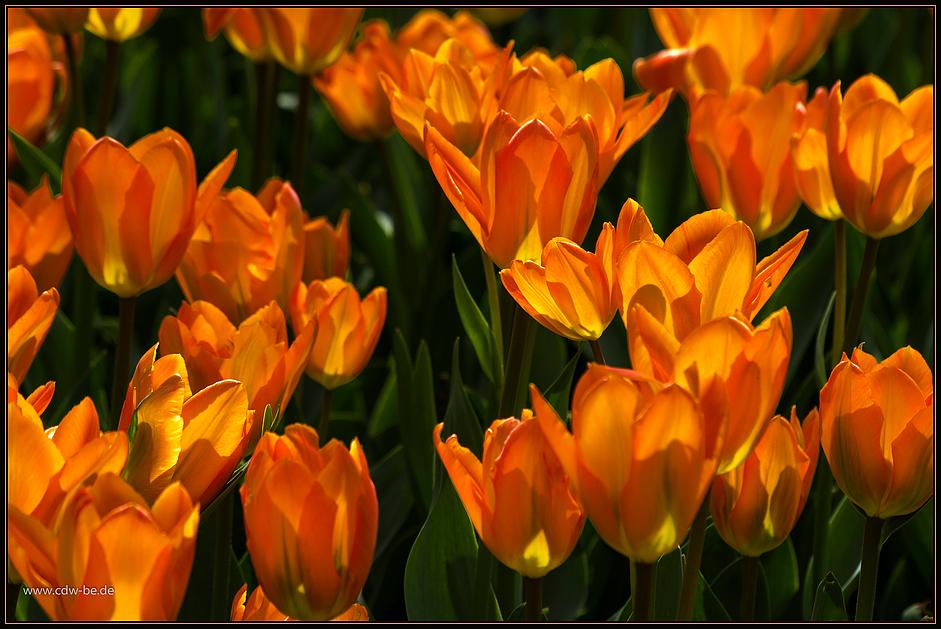 ...orange...