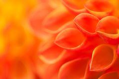 orange Detail