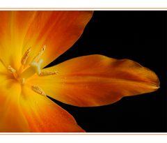 Orange, die Farbe des Jahres
