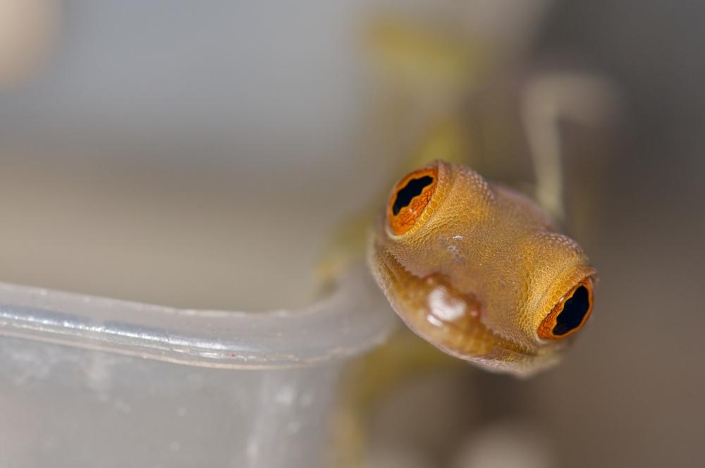 orange eye macht einen auf neugierig ;-)