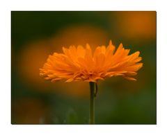 Orange..